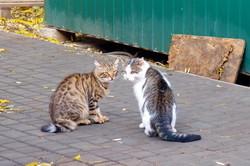 Осенняя фотозарисовка в Одессе: коты, птицы и листья