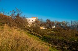 Берегоукрепление на Фонтане началось с массового выпиливания деревьев (ФОТО)