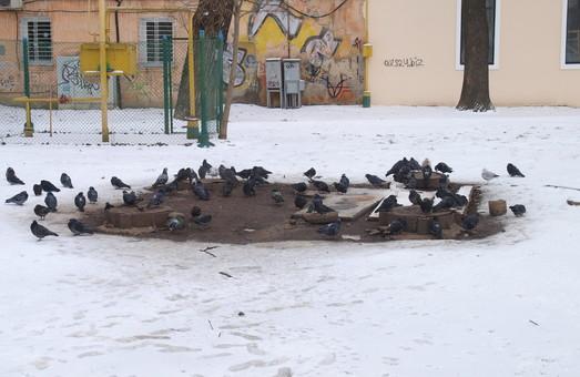 В Одессе хотят благоустроить два сквера
