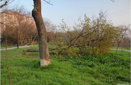 Около десятка деревьев уничтожено в сквере на Нагорном бульваре