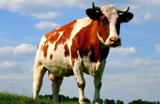 Хозяйства Одесской области получили более 4 миллионов гривен на содержание коров