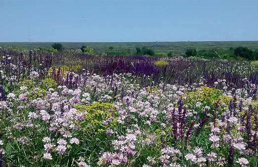 Создание национального парка «Тарутинская степь» в Одесской области откладывается