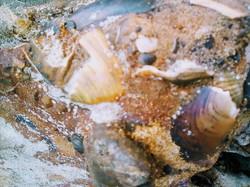 Старинный якорь обнаружен  в Нацпарке «Тузловские лиманы» (ФОТО)