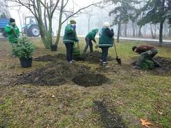 Голубые ели появились в одесском парке Победы (ФОТО)