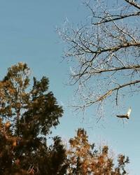 Как село на юге Одесской области берегут совы (ФОТО)