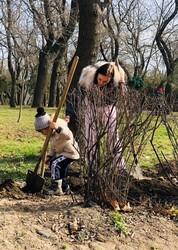 Сиреневая аллея появилась в одесском в парке Шевченко (ФОТО)