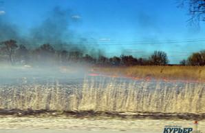 В Одесской области снова горят плавни на Днестре и Дунае (ФОТО)