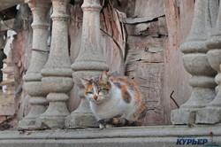 Одесские мартовские коты (ФОТО)