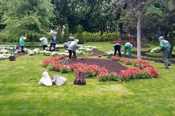 В Одессе высаживают летние цветы (ФОТО)