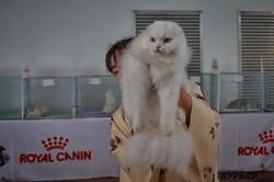 В Одессе показали самых красивых котов (ФОТО)