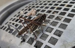 Одесситы обеспокоены нашествием насекомых (ФОТО)