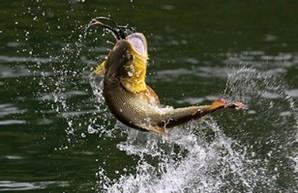 В Днестровском лимане разрешена рыбная ловля