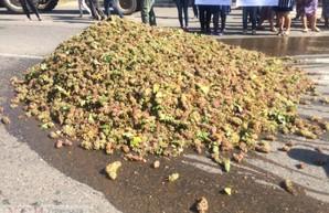 В знак протеста: виноградари Одесчины высыпали урожай на автотрассу