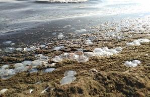 Одесситы бьют тревогу: побережье усеяно мёртвыми медузами