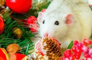 В Одессе стартовал творческий конкурс, посвящённый наступающему году мыши
