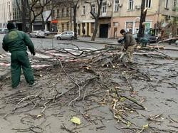 Штормовой ветер в Одессе валит деревья и повреждает электросети