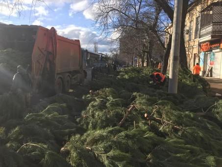 После Нового года на улицах Одессы остались сотни брошенных ёлок