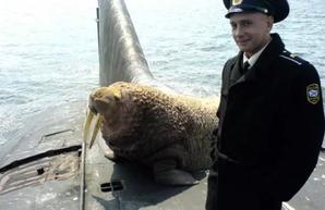 Беззащитный Северный флот или зачем России кабельные суда