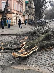 Над Одессой бушует ураган: погибшая женщина, сорванные крыши и поваленные деревья (ФОТО)