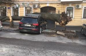"""400 деревьев и 224 населенных пункта без света: итоги одесского урагана """"Юля"""""""