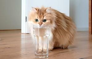Действительно ли водопроводная вода в Одессе не годится для питья