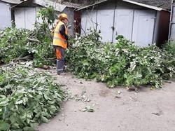 Деревопад в Одессе: результаты урагана