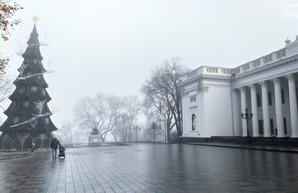 Главная елка Одессы обойдется почти в 2 миллиона